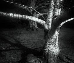 Tree Yoga   The Egrets