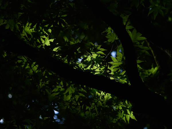 The Deep Forest Green