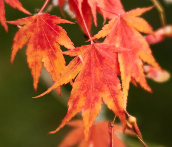 Leaf and Lichen 1