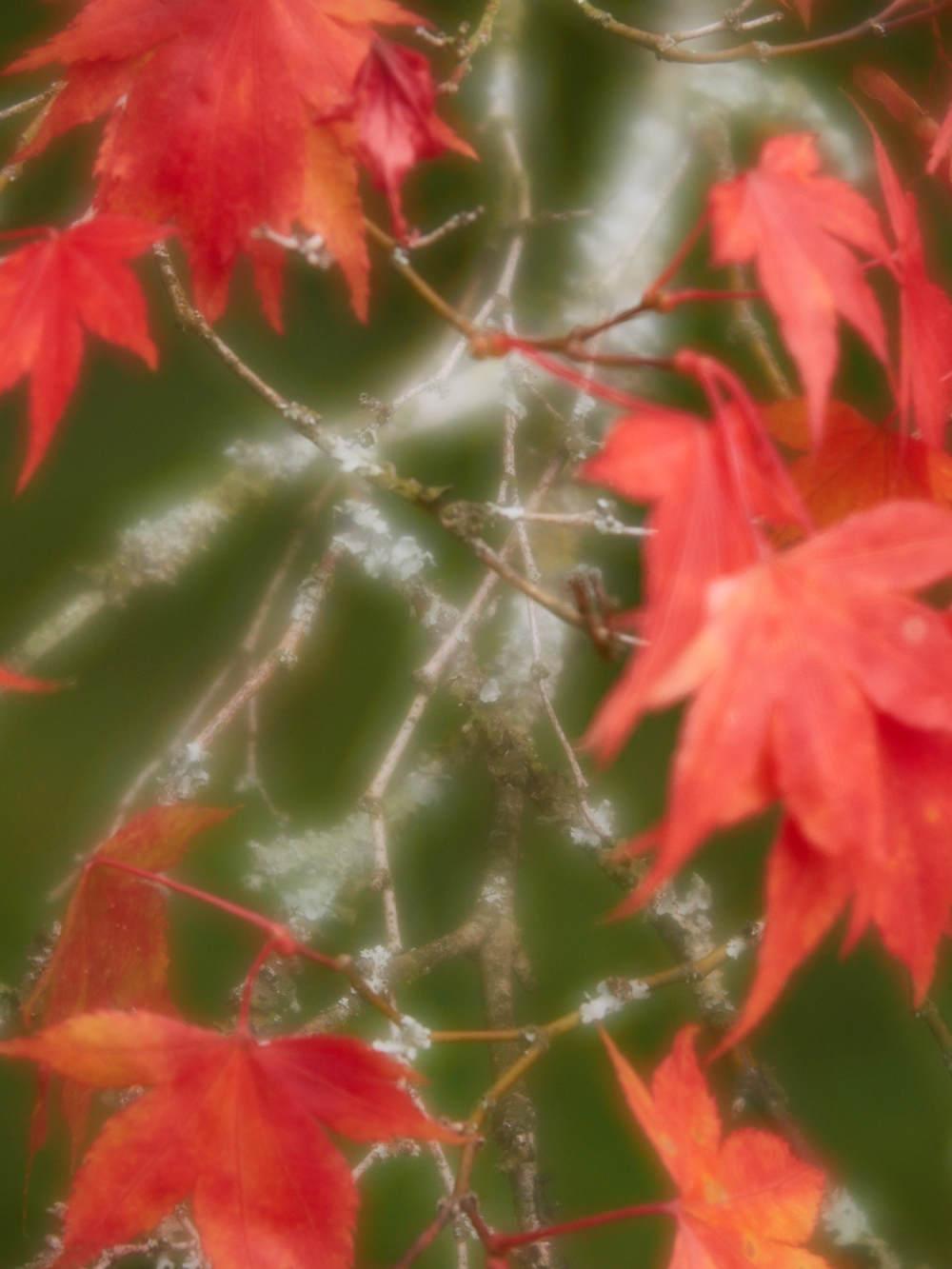 Leaf and Lichen 3