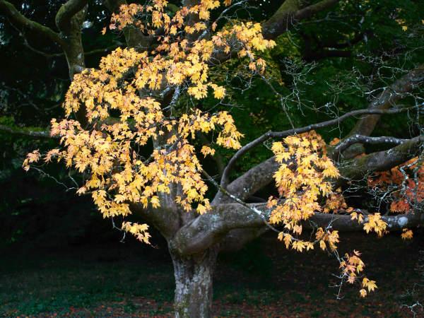 Leaf and Lichen 4