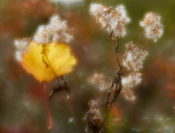 Soft-focus lens in the autumn forest