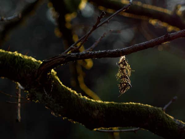 Moss Bauble