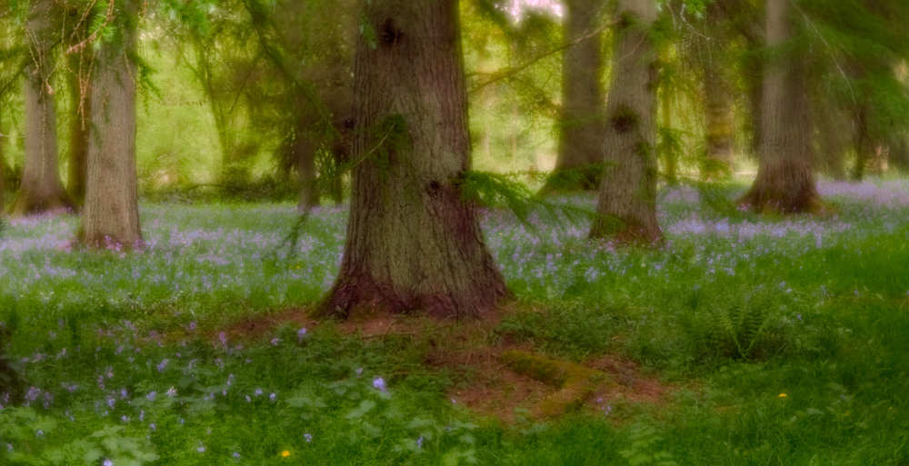 Underneath the Larches (spring edition)
