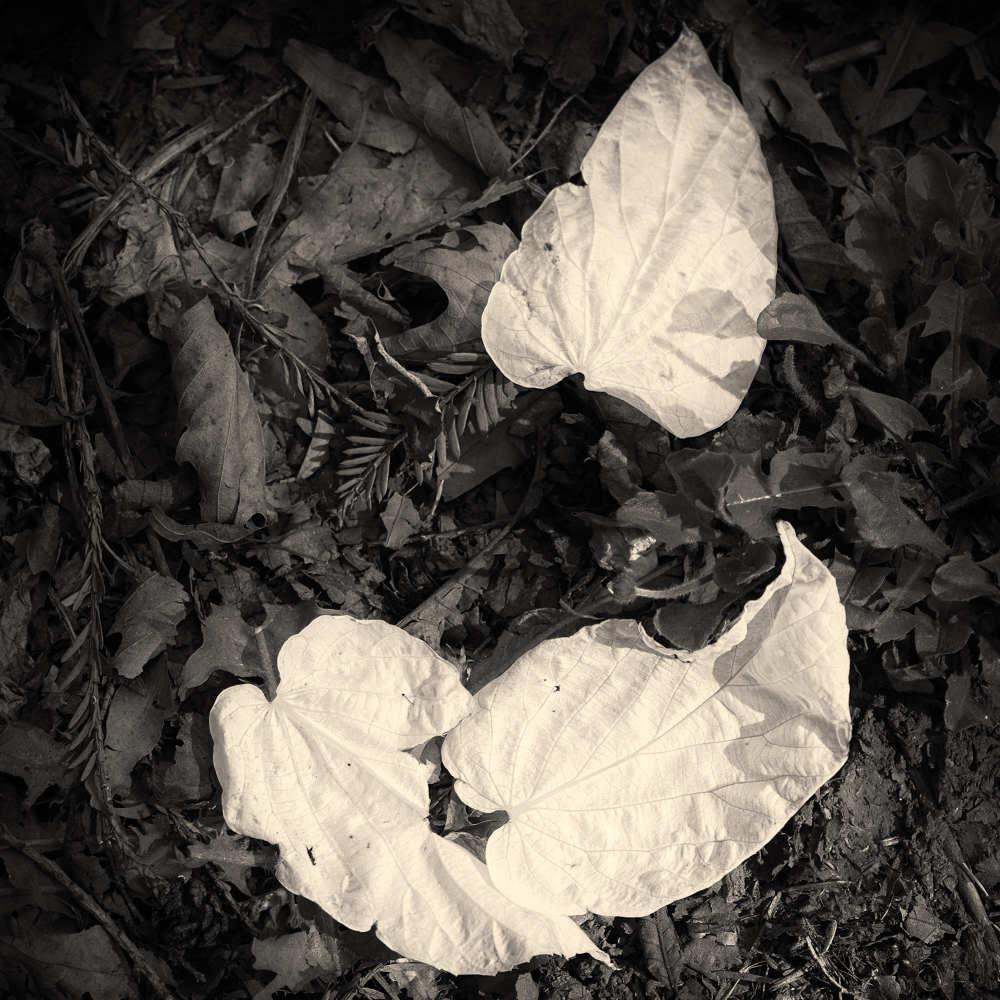 Fallen Doves