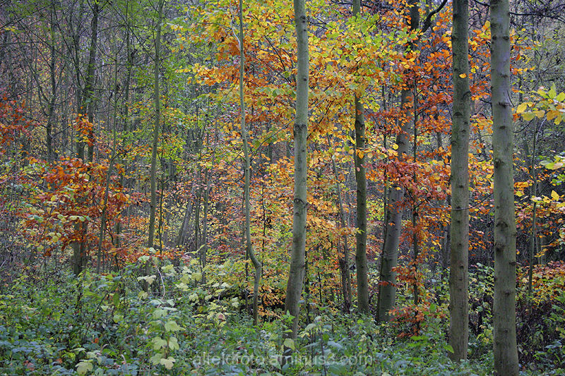 Wald im Herbst (At the Forest)
