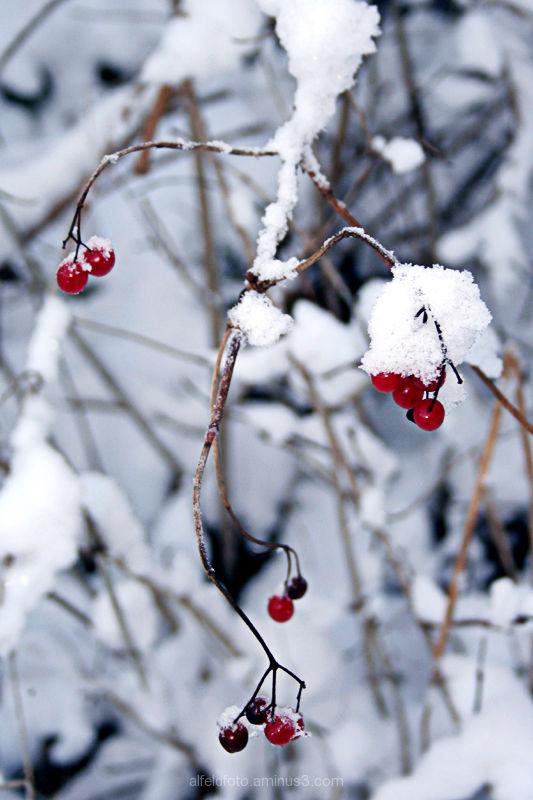 Winter im Leinebergland