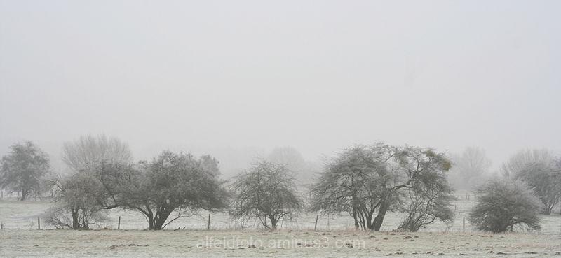 Winterlandscheft bei Brüggen im Leinebergland