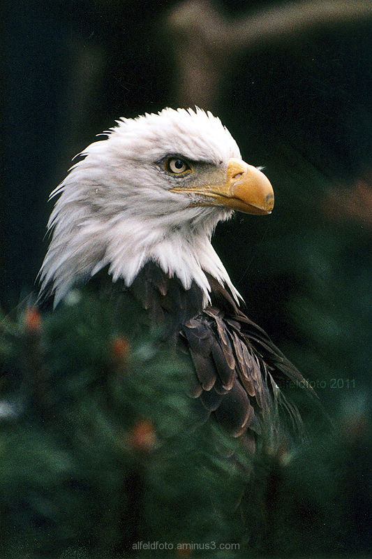 Ein Alfelder in... Vogelpark Walsrode