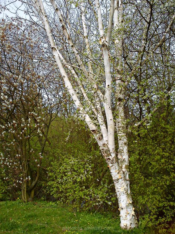 Frühling im Leinebergland