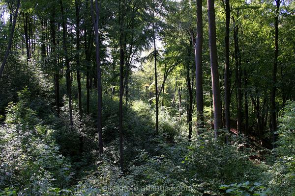 Wald auf dem  Himmelberg im Leinebergland