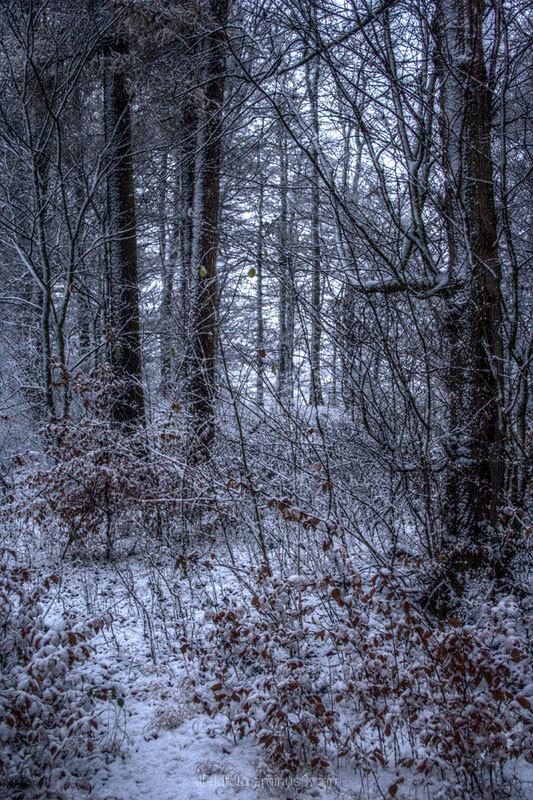 Wald bei Winzenburg am Rennstieg