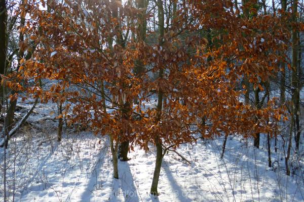 Immer noch Winter im Leinebergland