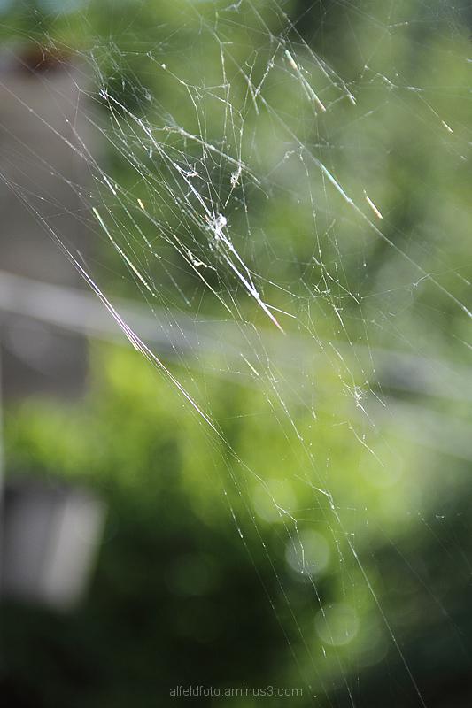 Spinnweb und Wäscheleine