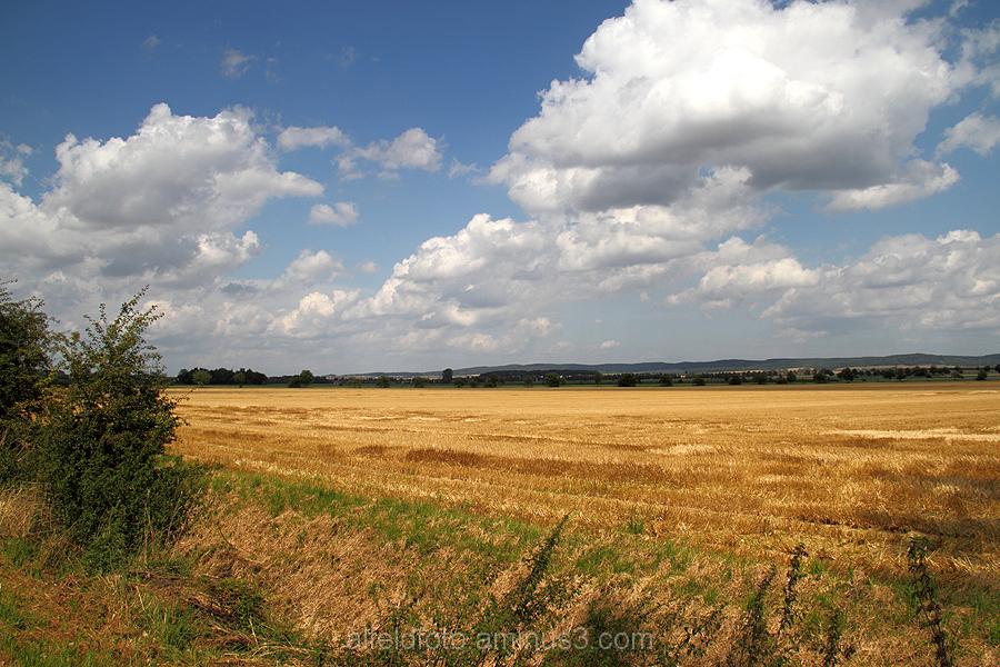 Felder bei Rheden im Leinebergland