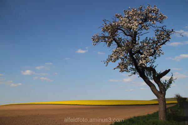 Frühling bei Haus Escherde im Leinebergland