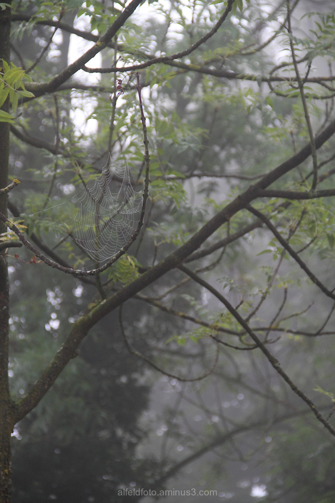 Herbst in Alfeld im Leinebergland
