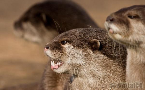 Nasty Otters