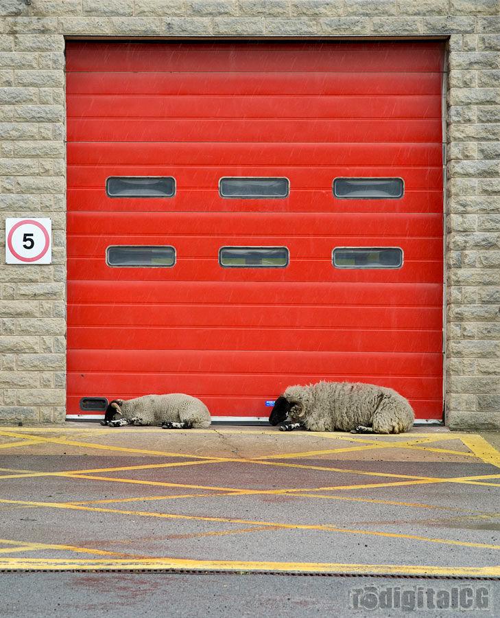 Doors week #4 - Draught Excluders