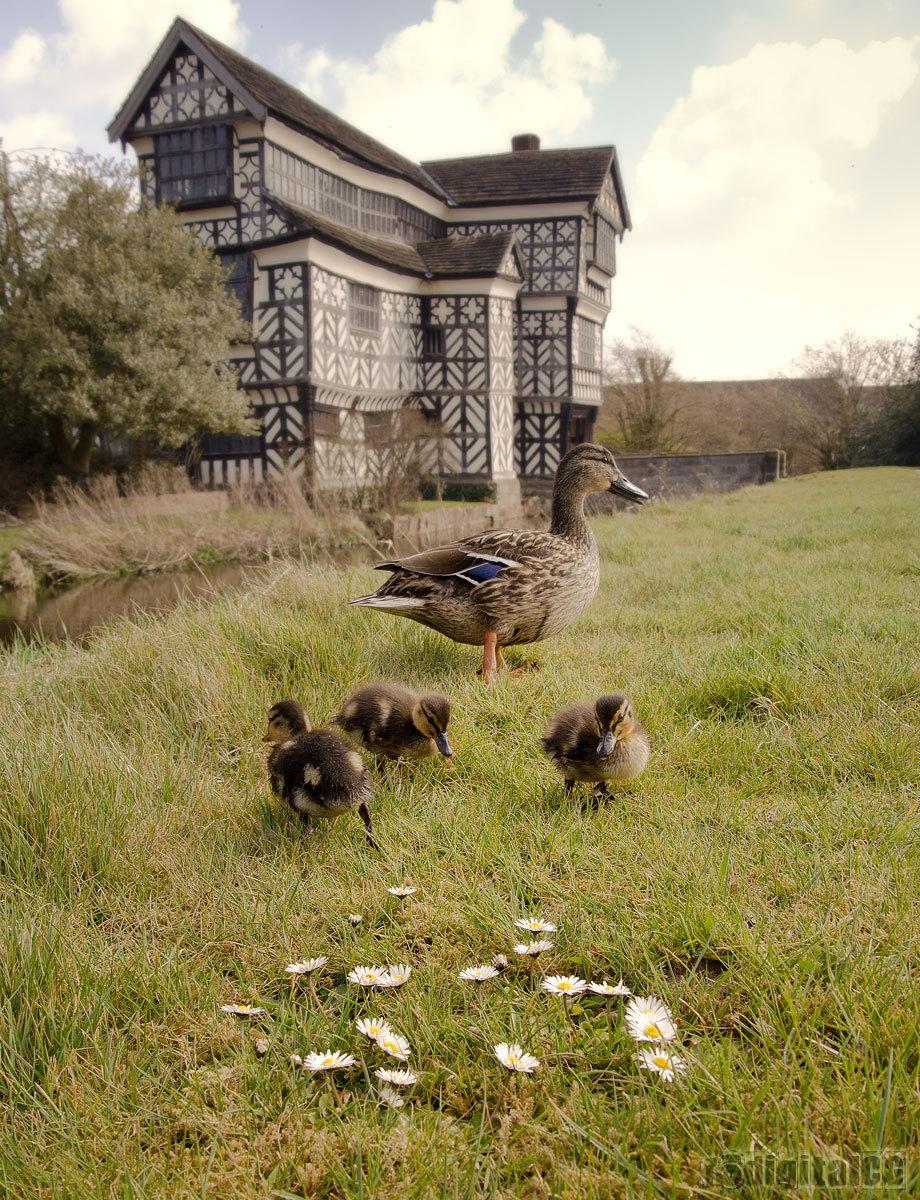POTW13#16 - Mother Ducker