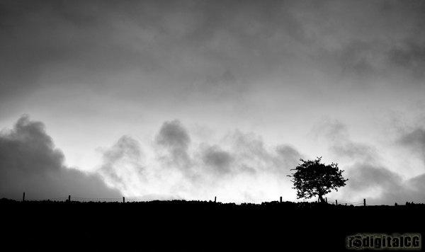 POTW13#20 - Lone Tree