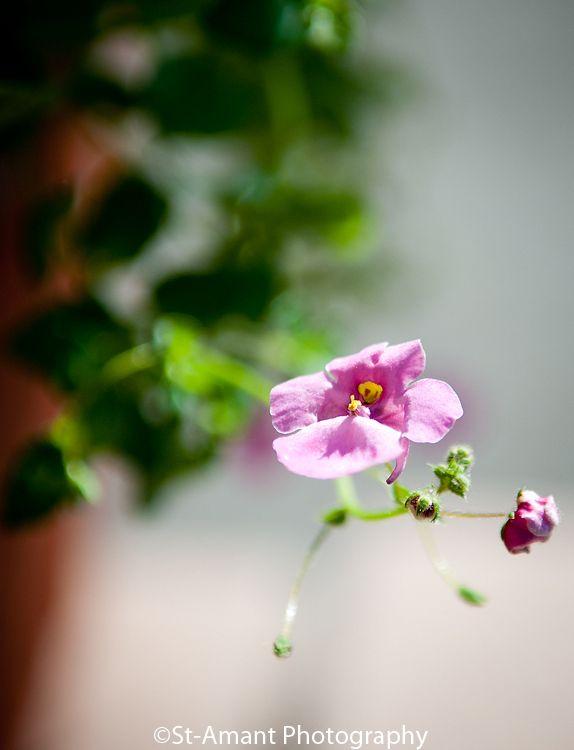 Flower plant plants green nature