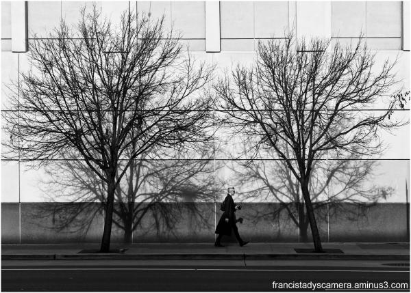 francis tady, san francisco, soma, tree, shadow, s