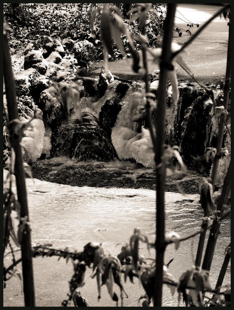 un ruisseau du bois de vincennes