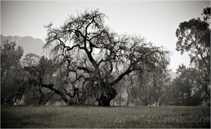 Great Oak