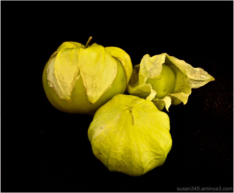 September Tomatillos