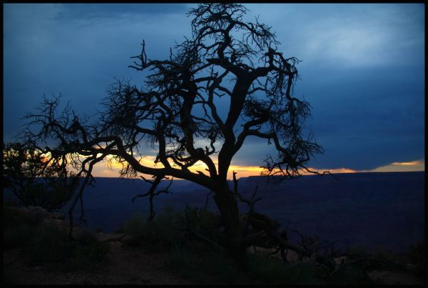 Silhouette of dead tree at sunset at Grand Canyon