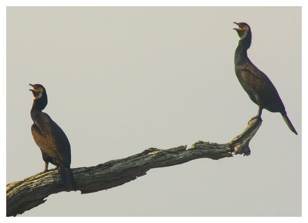 Birds at Orange County Resort in Nagarhole