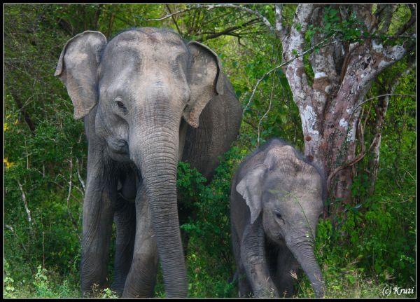Ma and Baby Elephant