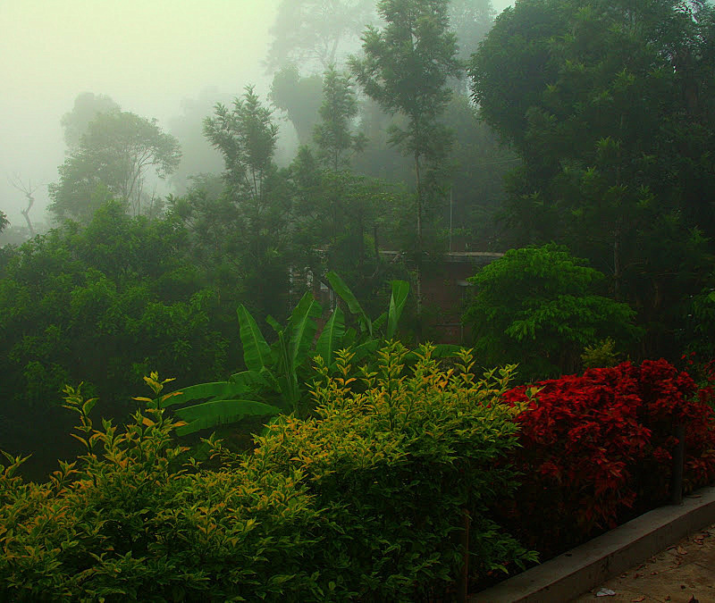 Early morning fog in the mountains of Coorg