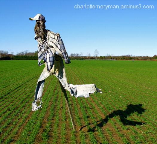 scarecrow running potato field wainscott ny
