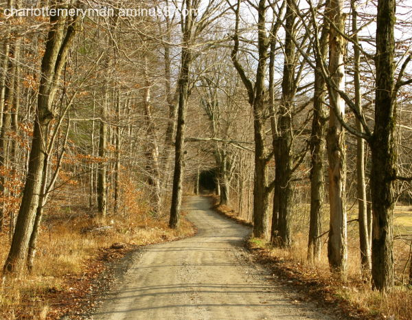 curving dirt road bare trees conway massachusetts