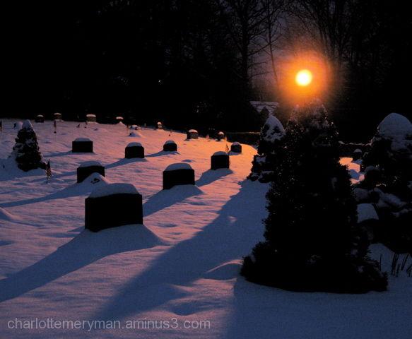 evergreen tree light cemetery snow