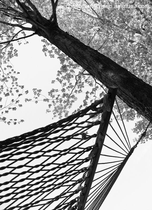 Treetop dreams