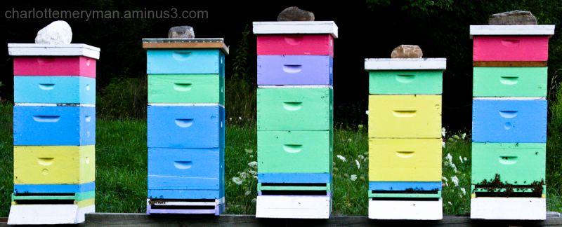 Honeybee hotels