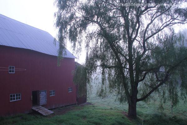 Morning mist, Calais, Vermont