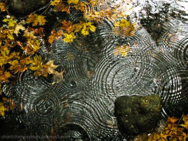 Streamscape, no. 7: raindrops