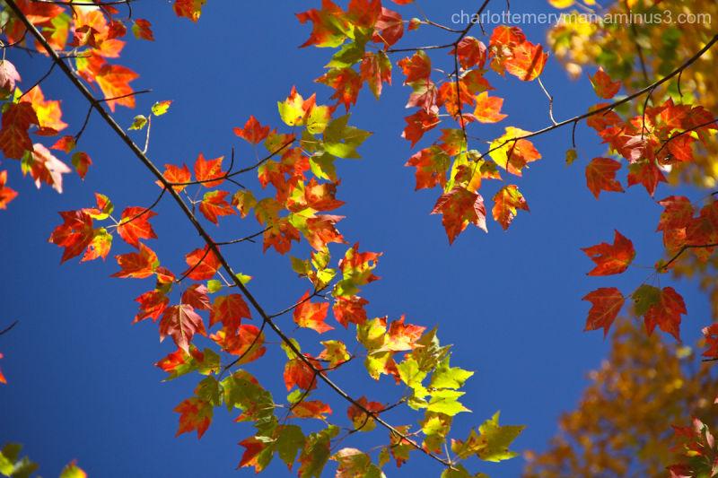 Blue sky, fall foliage