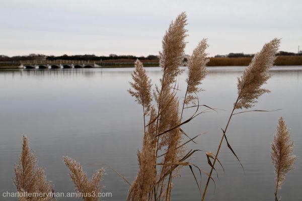 Sagg Pond