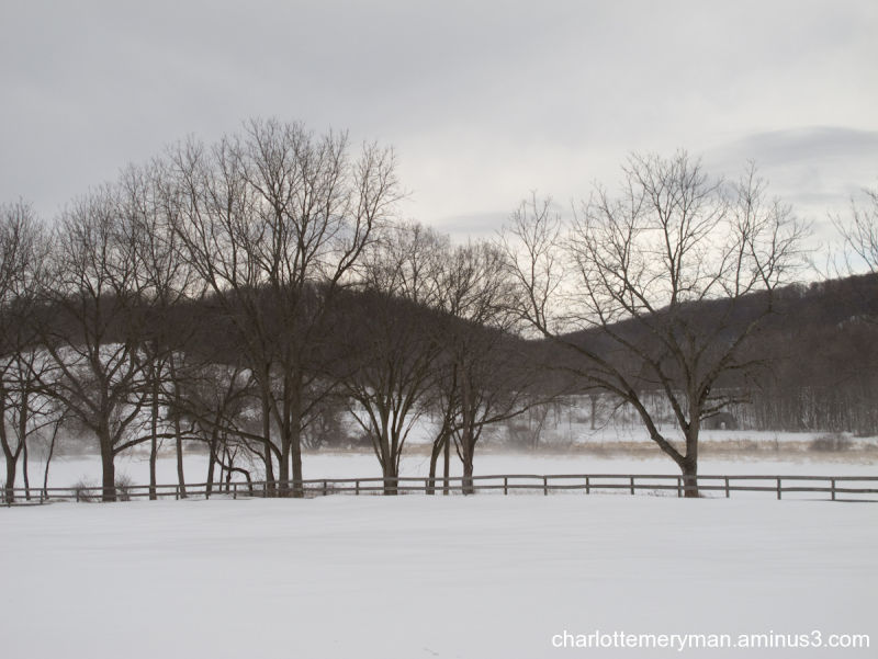 Winter treeline