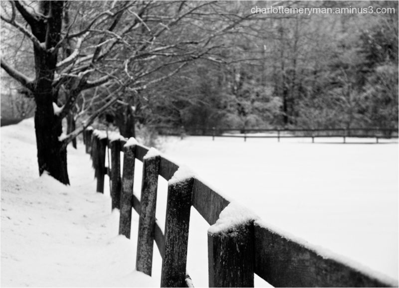 Frosted fence line