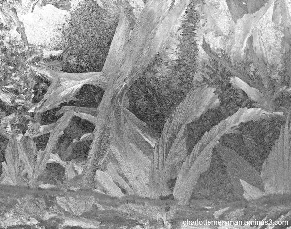 Frost jungle