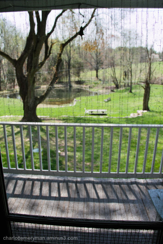 View from the screen door