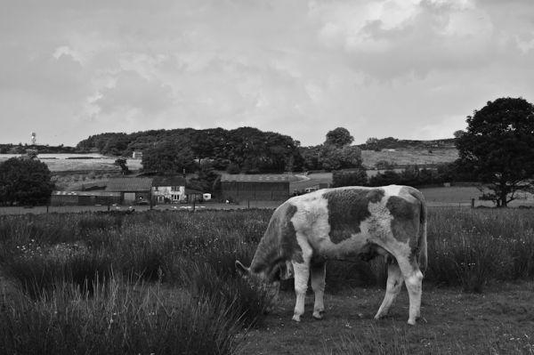 Higher Broach, Foulridge