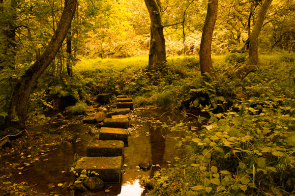 Stepping stones Swindon Water