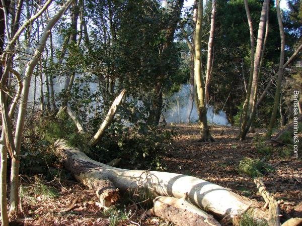 Arbre abbatu dans la forêt